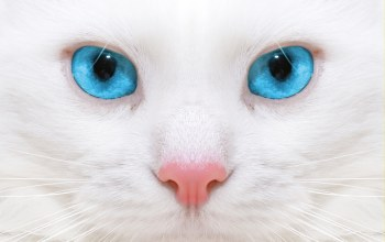 close up,kitten,Beautiful white cat,красивая белая кошка,micro