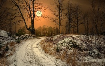 tree,snow,path,winter,sky