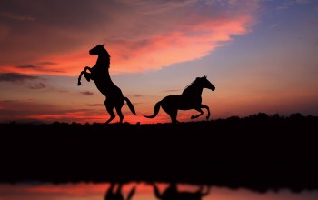 great,silhouette,Horses,picture,view,лошади,Sunset,свобода