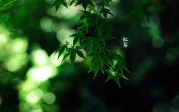 green colour,1920x1200,иероглифы,by burningmonk