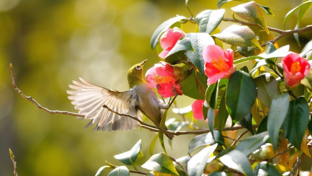 wild,branch,hummingbird,flower