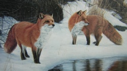 wild,foxes,river,snow,forest