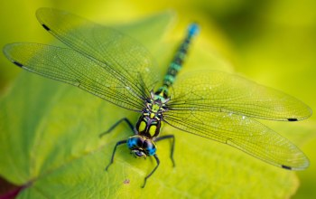 vegetation,insect,legs,head,Dragonfly,leaves,eyes,wings