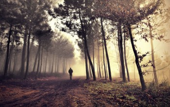 Road,morning fog in the forest,Alone
