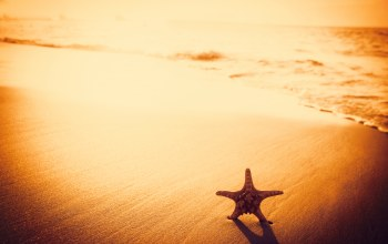 sand,beach,starfish,Sunset