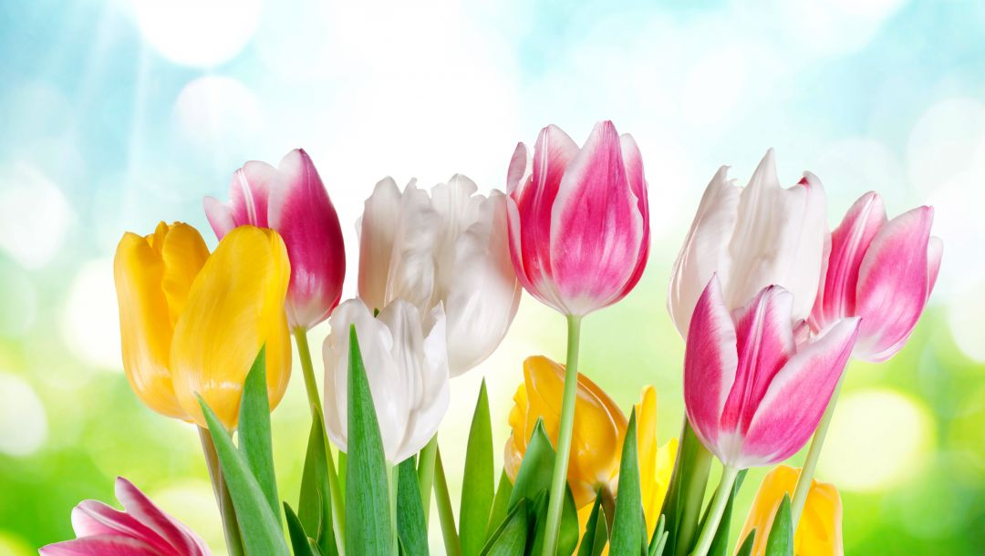 spring,sunshine,colorful,tulips,цветы,Весна,sky