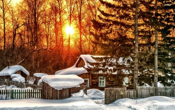 house,forest,snowy,sunlight,tree