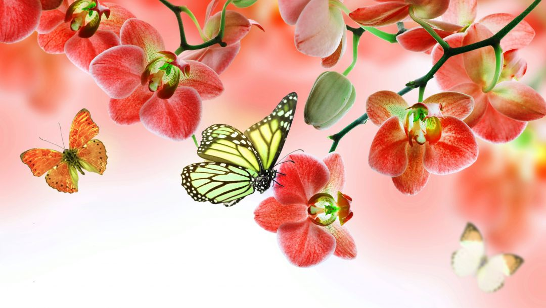 орхидея,цветы,beautiful,butterflies,Orchid