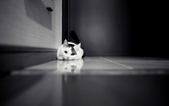 Floor,котёнок,cat,lonely,black and white,kitten