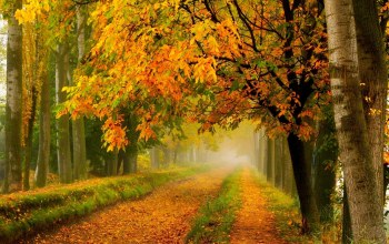 forest,colors,tree,leaves,path