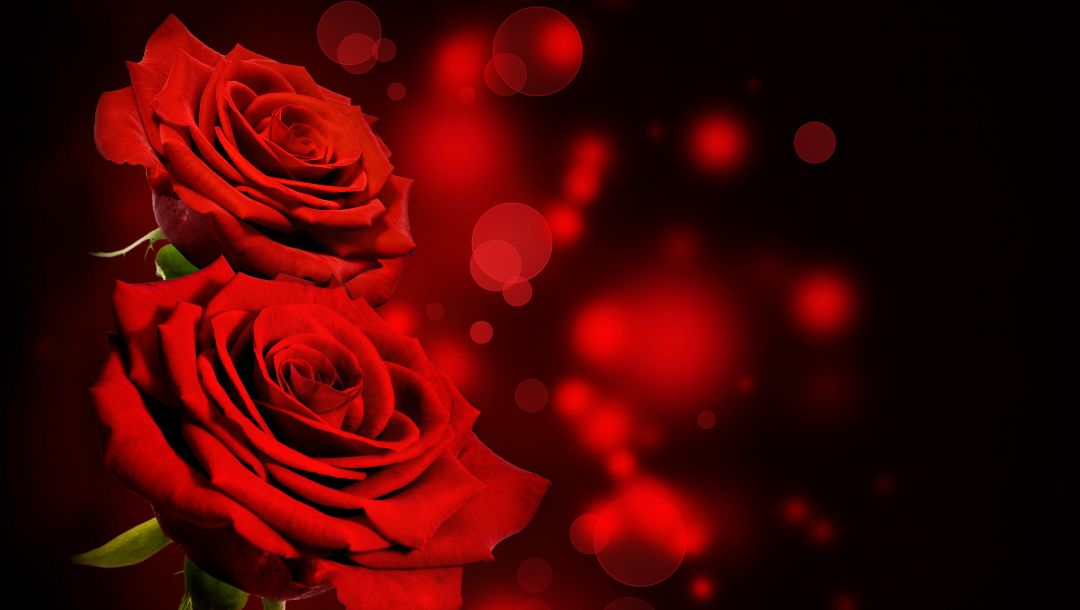 roses,Red