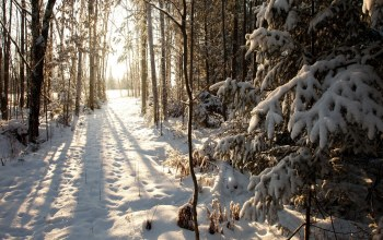 филлипс,northern woods,Phillips,winter,wisconsin,United states,висконсин