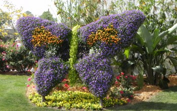 flower,garden,Epcot,Festival,international,цветы