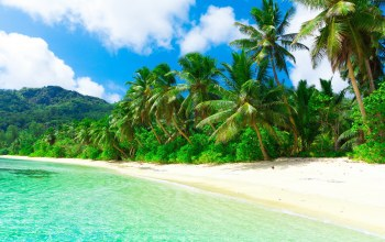 тропики,summer,лето,джунгли,красиво,beautiful,mountains,beach,tropic,ocean,jungle