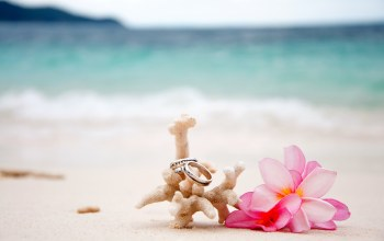 coral,rings,sand,beach,wedding,plumeria