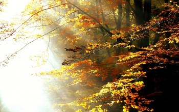 forest,trees,autumn,light,sunlight