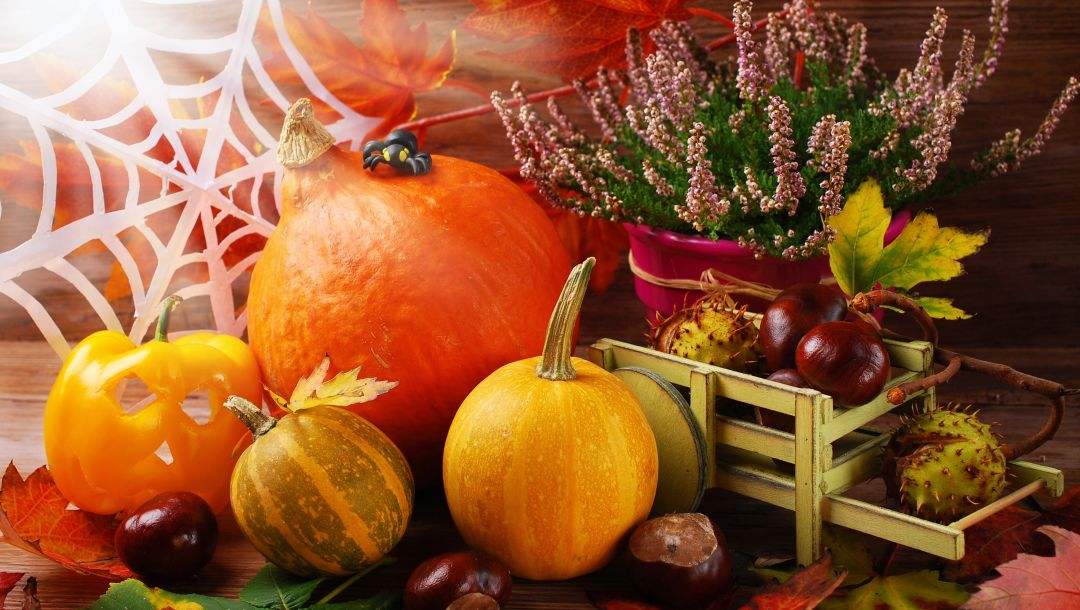 урожай,still life,harvest,autumn,осень,pumpkin,leaves,тыква