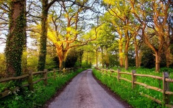 path,tree,country,fence