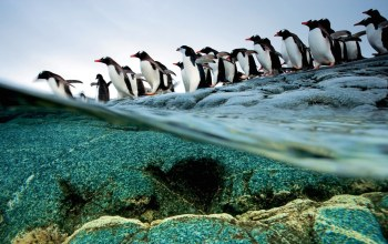 ice,wild,snow,iceberg,water,penguin