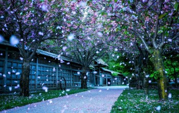 blossom,tree,Road,winter,snow,house