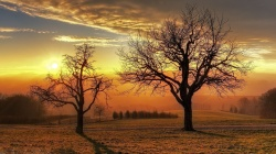 tree,fields,Sun,sunrise