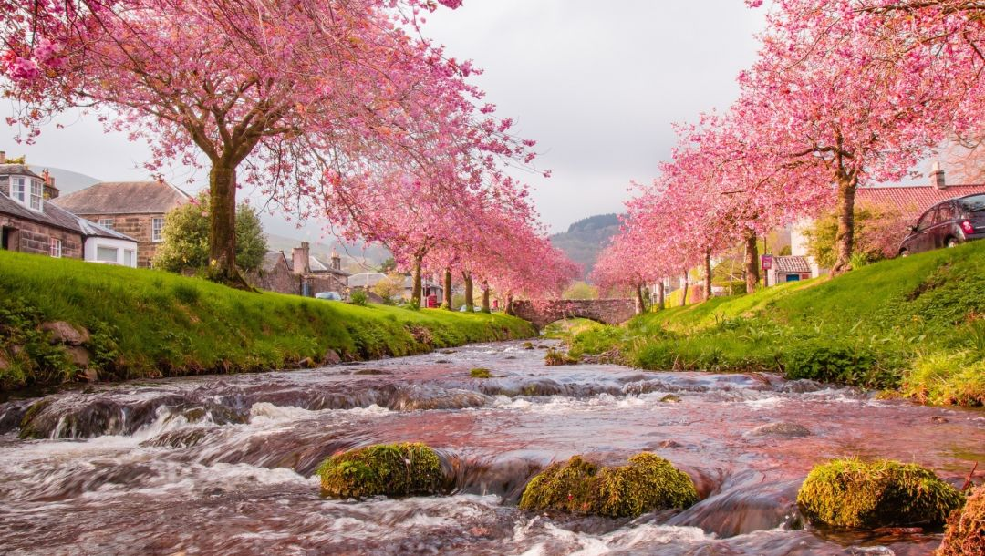 water,river,blossom