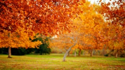 forest,patch,leaves,tree,autumn