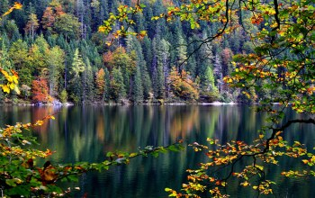 forest,reflection,water,tree,autumn,leaves