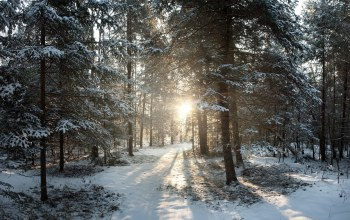 филлипс,wisconsin,northern woods,United states,winter,sunrise,Phillips