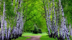 path,grass,green,trees,forest