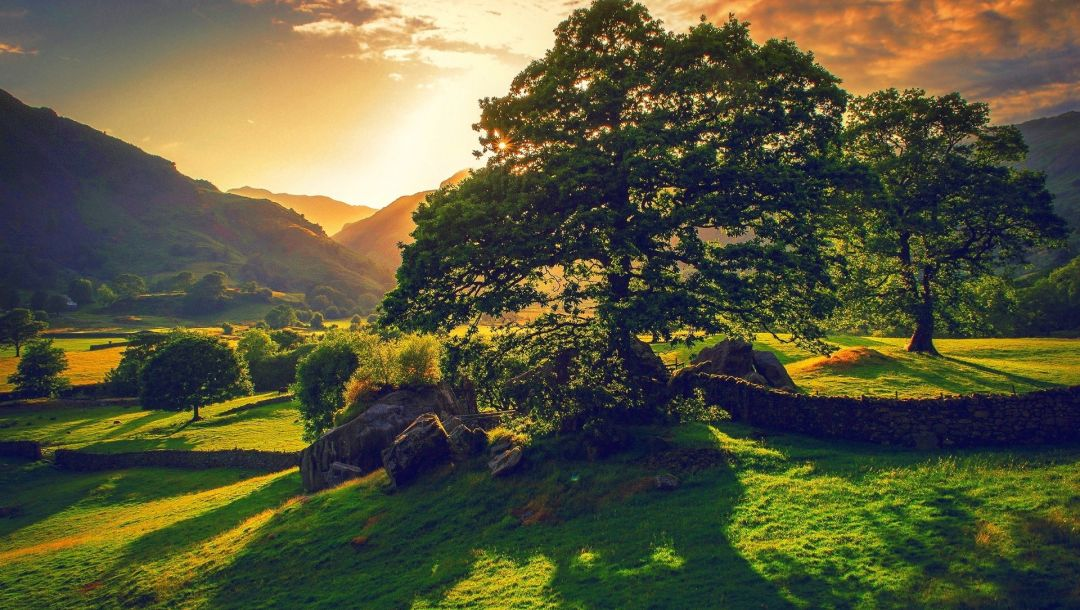 mountains,Sunset,trees,pleasant