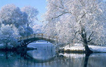 trees,river,winter,delta,snow,mountain