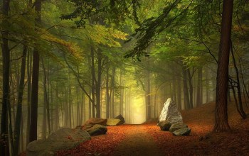 stone,trees,paths,forest