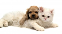 puppy,cute,affectionate,Kitty