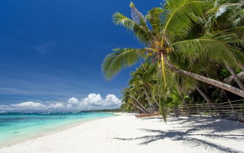 paradise,summer,shore,beach,palms,sand,tropical