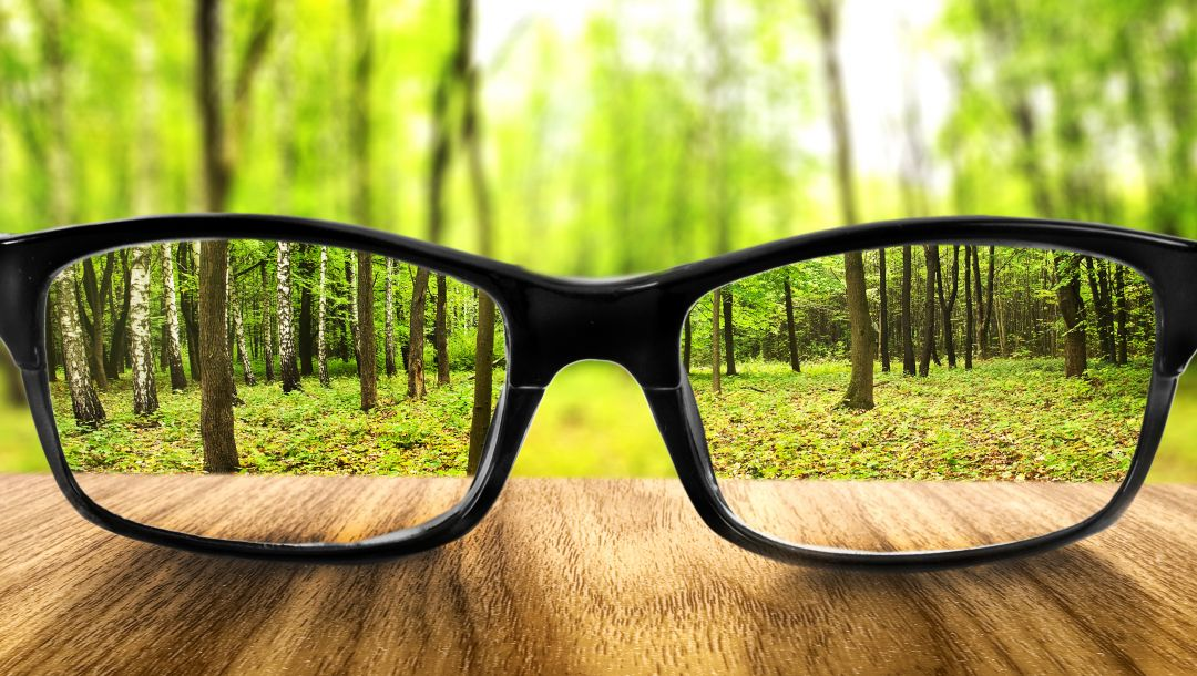 forest,glasses,Increase,Land