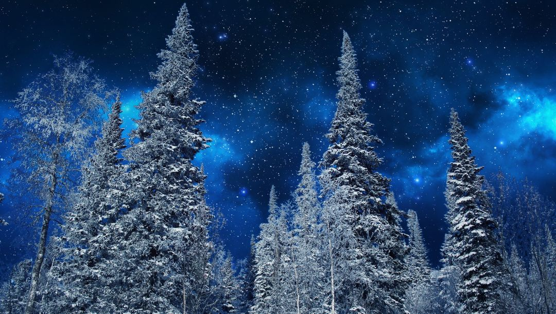 stars,snow,sky,winter,trees,ночь