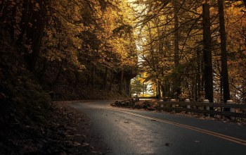 Road,tree,dark,autumn,forest,leaves