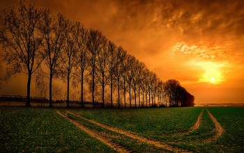 Sunset,field,trees,sky