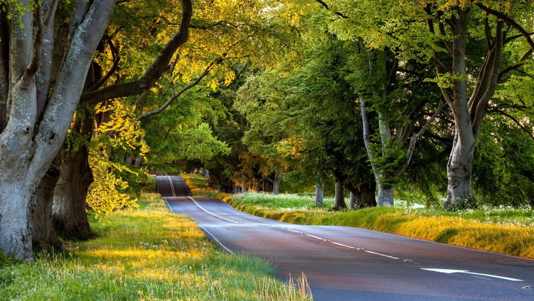 Natural,tree,leaves,Road
