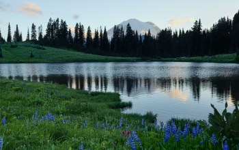 Mount rainier national park,Lake Tiphsah,Mount rainier,Mount rainier,Tipsoo Lake,washington