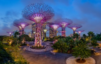 gardens by the bay,ночь,дизайн