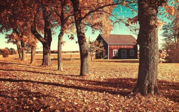 autumn,tree,house,leaves,patch