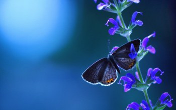 blue,branch,Butterfly,leaf