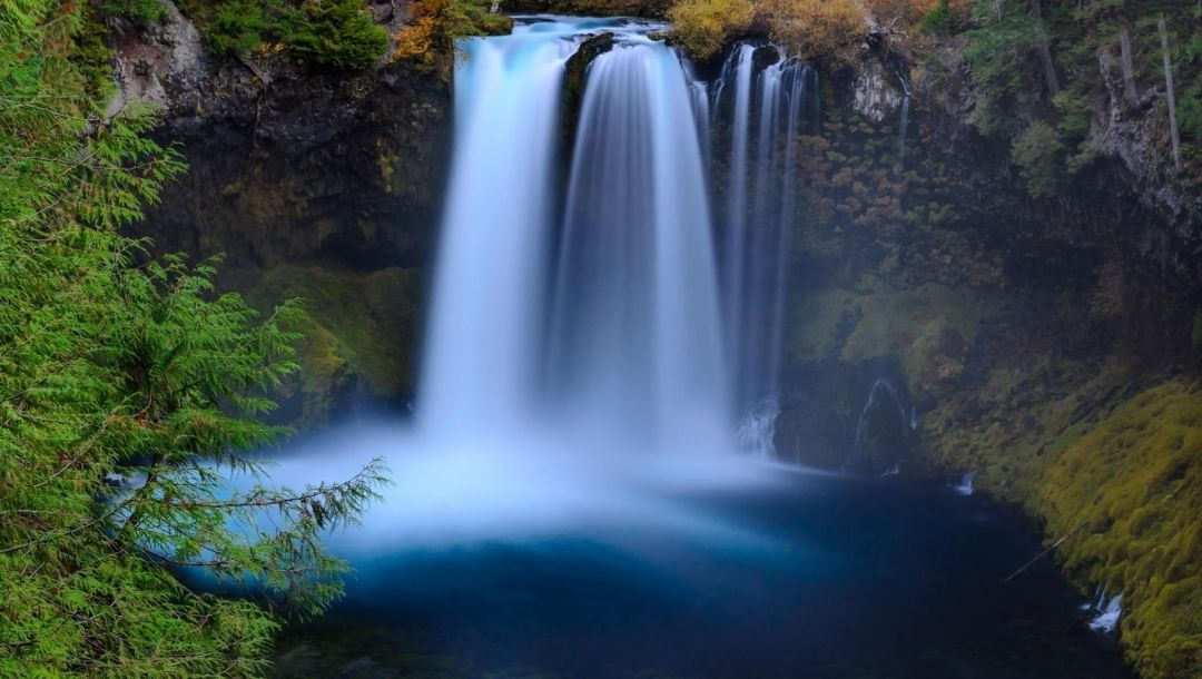 forest,river,waterfall,water,tree