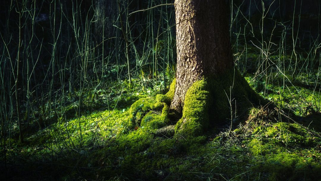 thigh,tree,root,forest