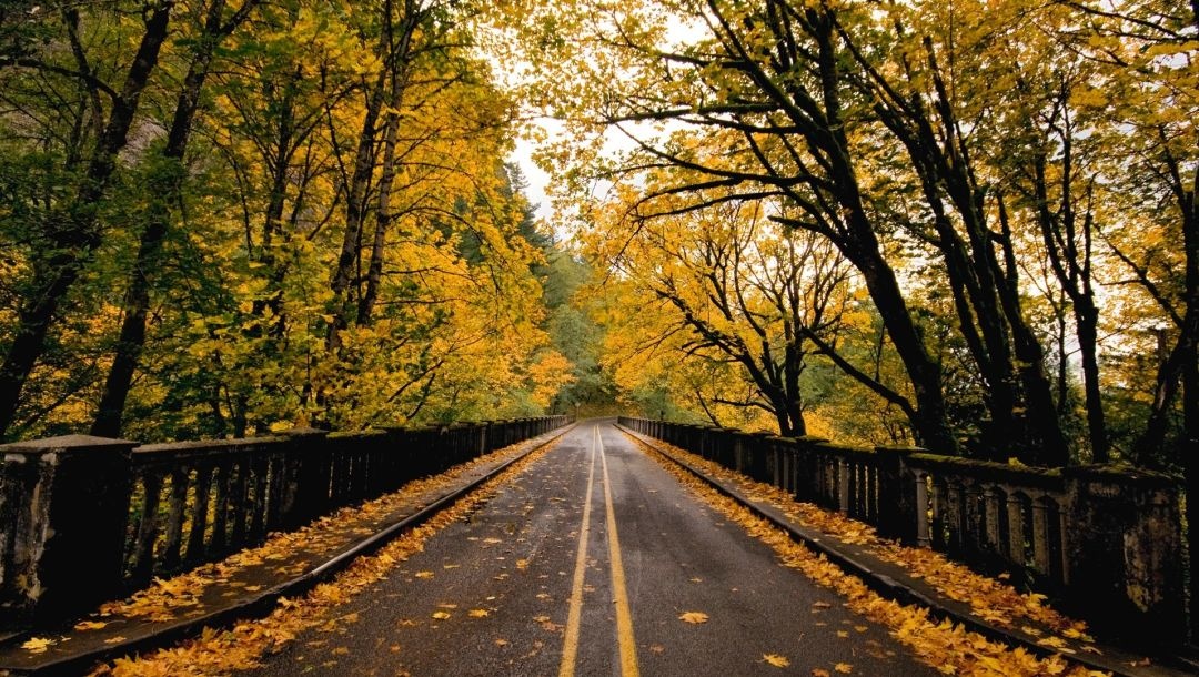 autumn,forest,leaves,naturals,Road,fence,tree
