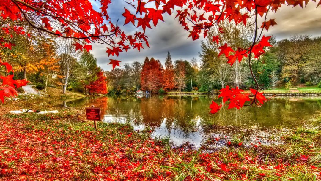 river,autumn,reflextion,tree,Red,leaves