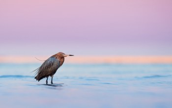 Sunset,wildlife,egret,dusk,Twilight