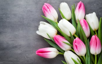 White,beautiful,цветы,spring,tulips